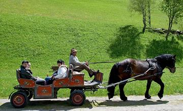 Horse carriage and sleigh rides Obergruberhof
